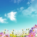 Nice spring situation for your design on sky background